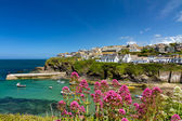 Cove and harbour of Port Isaac, Cornwall, England — Stock Photo