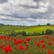 Stock Photo: Hills in with field of poppies near Leafield, Cotswolds, UK
