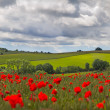 Hills in with field of poppies near Leafield, Cotswolds, UK — Stock Photo