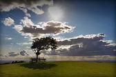 árbol con sol en cleeve hill en un día ventoso, cotswolds, inglaterra — Foto de Stock
