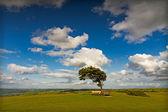 クリーブ丘の風の強い日, コッツウォルズ, イングランドの上で太陽と木 — ストック写真