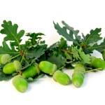 Acorns oak branches — Stock Photo #6980088