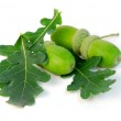 Acorns oak leaves — Stock Photo #6980092