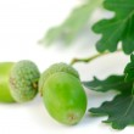 Acorn oak branch — Stock Photo #6980093