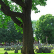 Alter Friedhof — Stockfoto