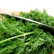 Dill herb cut — Stock Photo