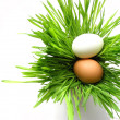 Easter eggs in grass on white — Stock Photo