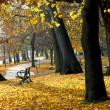 Autumn park — Stockfoto