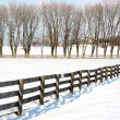 Farm fence and trees 1 — Stock Photo