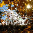 autumn sun — Stock Photo
