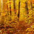 Fall forest — Stock Photo #6980467