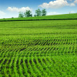 Green farm field — Stock Photo