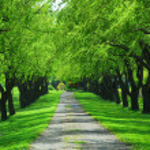 Green tree lane — Stock Photo #6980538