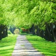 Green tree lane — Stock Photo