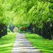Green tree lane - Foto Stock