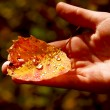 Hand fall leaf — Stock Photo #6980556