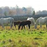 Horses — Stock Photo #6980561