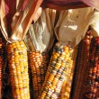 Indian corn — Stock Photo #6980581