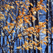 Stock Photo: Late fall