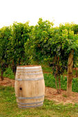 Wine barrel at vineyard — Stock Photo