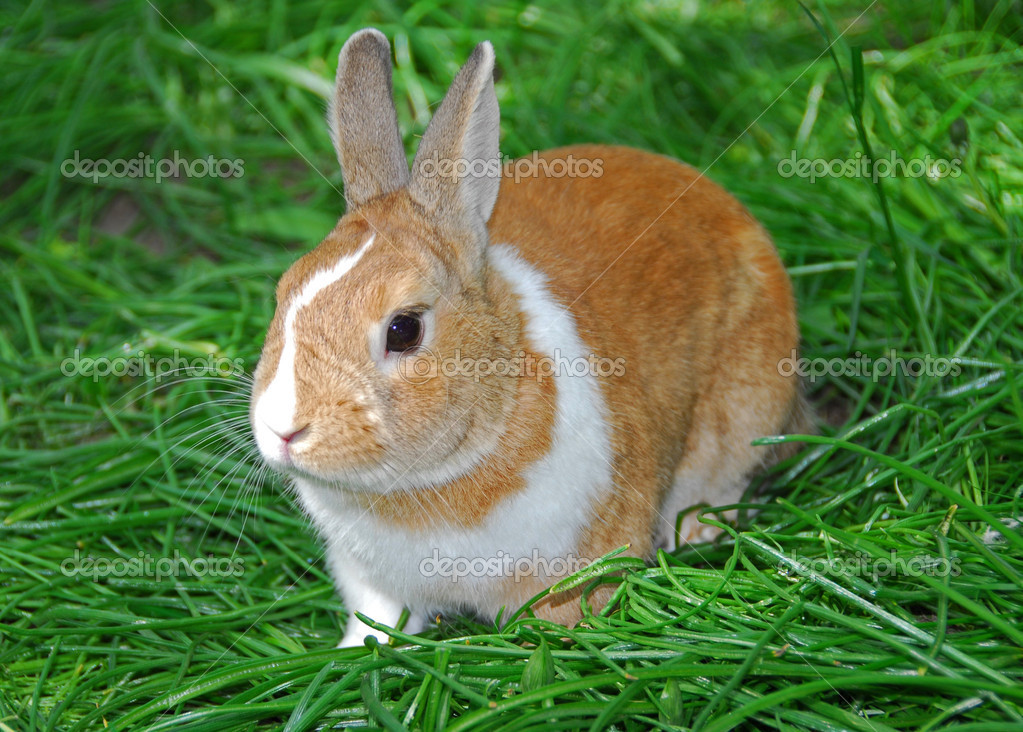 Bunny rabbit on green grass — Stock Photo #6980264