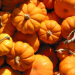 Stock Photo: Mini pumkins