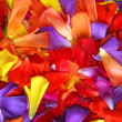 Flower petal background — Stock Photo