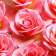 Pink roses — Stock Photo #7085088