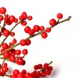 Red christmas berries - 图库照片