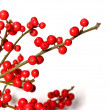 Red christmas berries - Stockfoto