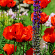 Stock Photo: Spring garden with poppies