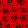 Red rose background — Lizenzfreies Foto