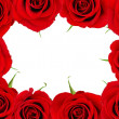 Red rose frame — Stock Photo