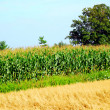 Agriculture — Stock Photo #7085204