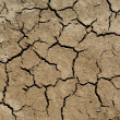 Dry soil background — Stock Photo