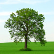 Single tree — Stock Photo