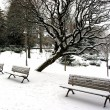 Stock Photo: Winter benches