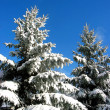 Winter fir trees under snow - Stock Photo