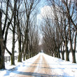 Winter tree lined lane — Stock Photo