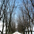 Winter tree lined lane 1 — Stok fotoğraf