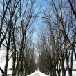 Winter tree lined lane 1 — Stock fotografie