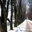 Winter tree lined lane 3 — Stock Photo