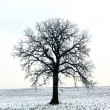 Tree in a winter field 1 — Zdjęcie stockowe