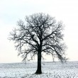 Tree in a winter field 1 — Stok fotoğraf