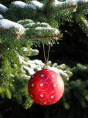 Red Christmas ball on fir tree — Stock Photo