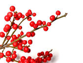 Red christmas berries — Stock Photo