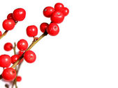 Red christmas berries on white — Stock Photo