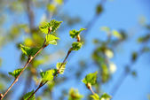 Spring green leaves — Stockfoto