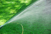 Sprinkler on lawn — Stock Photo