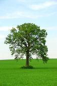 Seul arbre — Photo